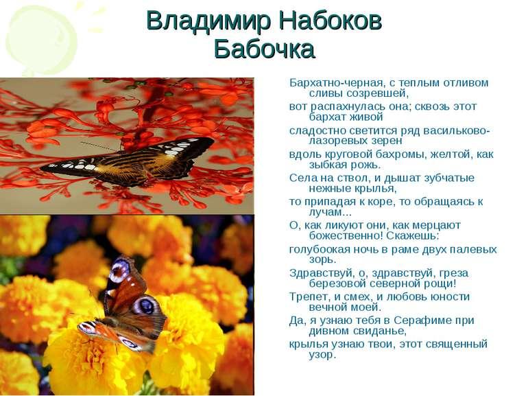 Владимир Набоков Бабочка Бархатно-черная, с теплым отливом сливы созревшей, в...