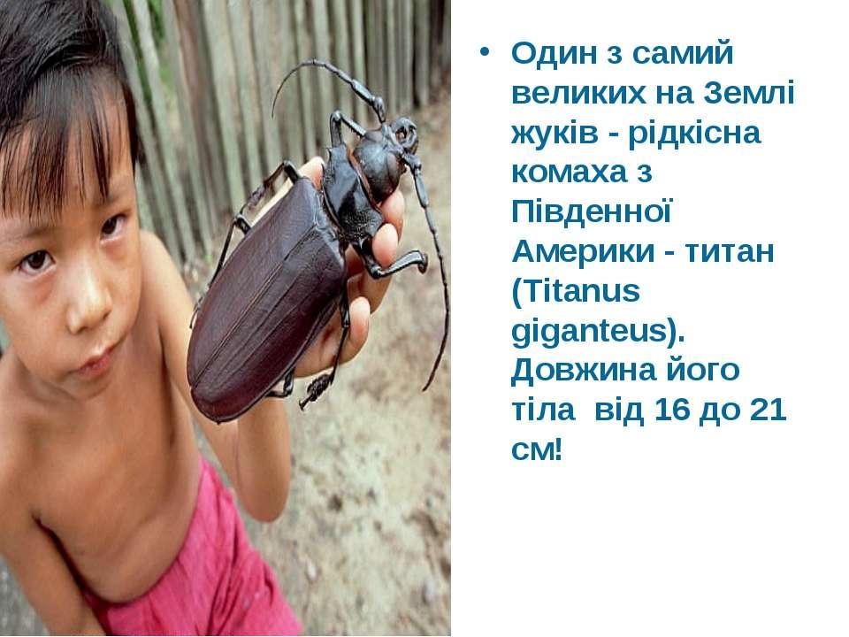 Один з самий великих на Землі жуків - рідкісна комаха з Південної Америки - т...