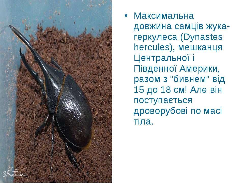 Максимальна довжина самців жука-геркулеса (Dynastes hercules), мешканця Центр...