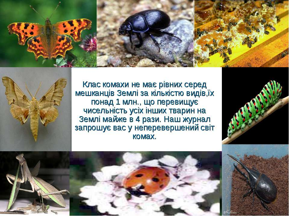 Клас комахи не має рівних серед мешканців Землі за кількістю видів,їх понад 1...