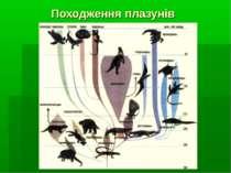 Походження плазунів