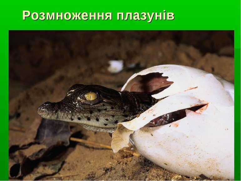 Розмноження плазунів