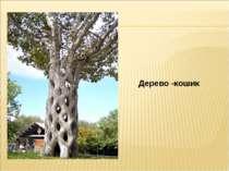 Дерево -кошик