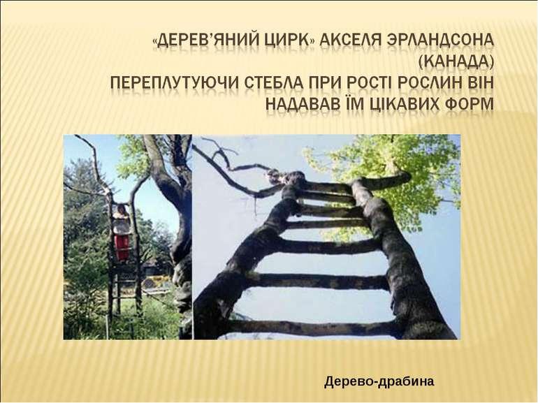 Дерево-драбина
