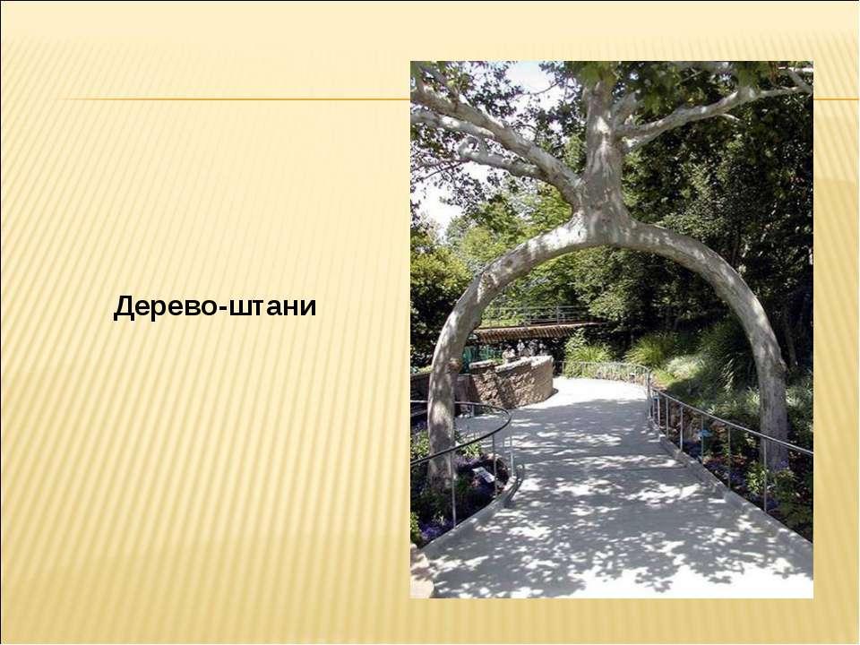 Дерево-штани