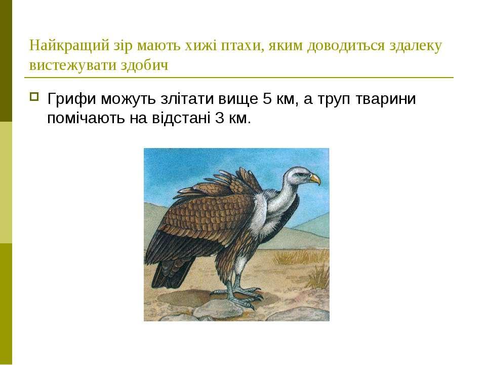 Найкращий зір мають хижі птахи, яким доводиться здалеку вистежувати здобич Гр...