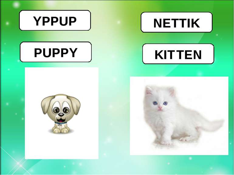 YPPUP PUPPY NETTIK KIT TEN