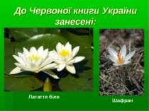 До Червоної книги України занесені: Латаття біле Шафран
