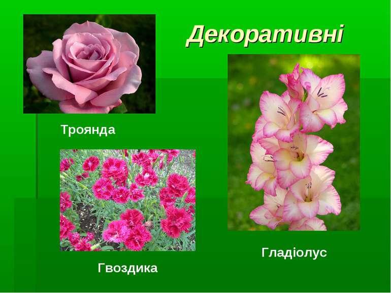 Декоративні Гвоздика Троянда Гладіолус