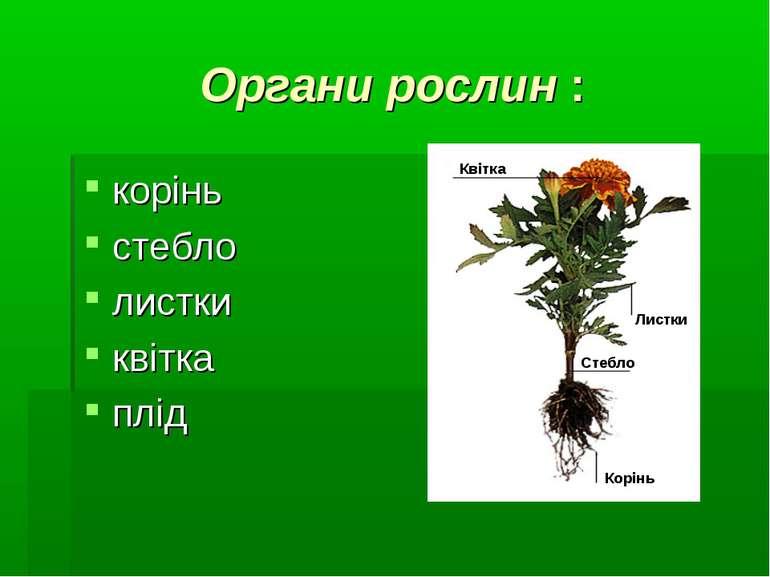 Органи рослин : корінь стебло листки квітка плід