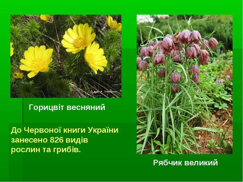 Горицвіт весняний Рябчик великий До Червоної книги України занесено 826 видів...