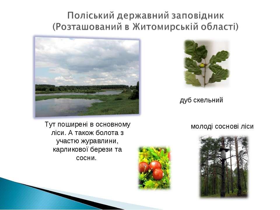 Тут поширені в основному ліси. А також болота з участю журавлини, карликової ...