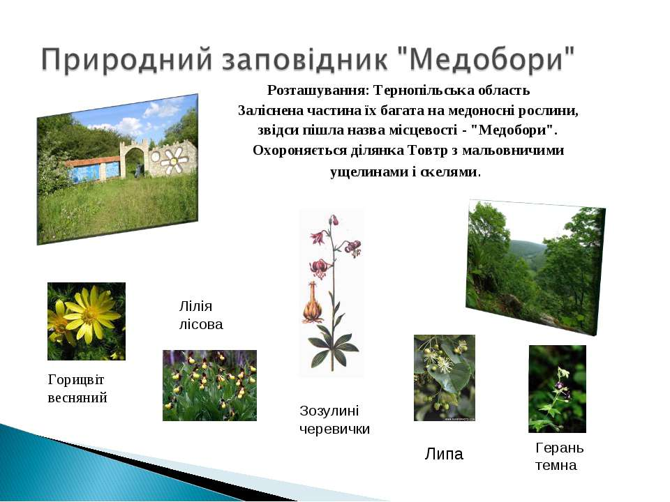 Розташування: Тернопільська область Заліснена частина їх багата на медоносні ...