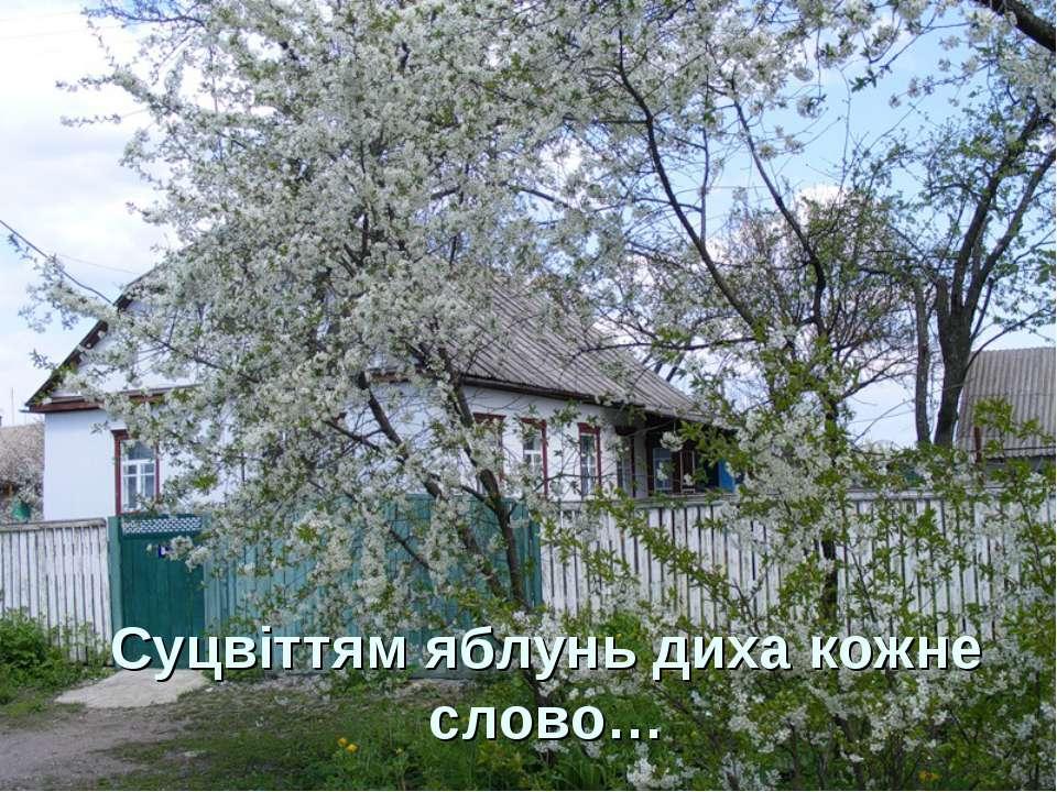 Суцвіттям яблунь диха кожне слово…