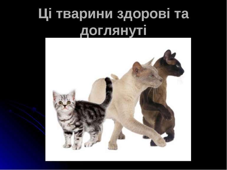 Ці тварини здорові та доглянуті