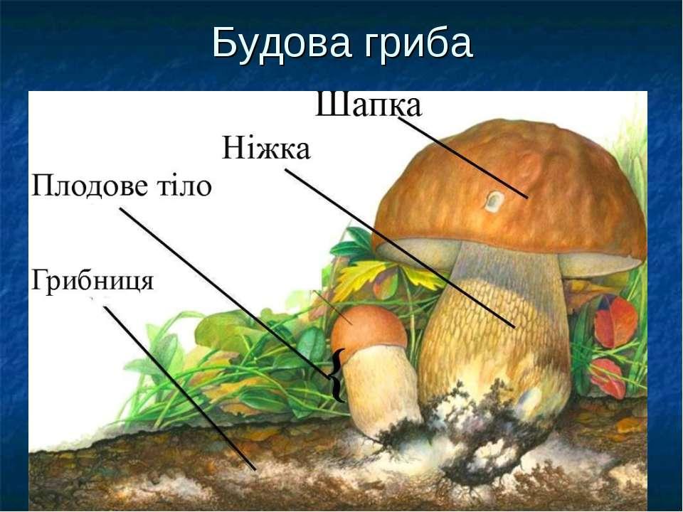 Будова гриба