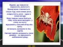 Відомо, що павуки не переносять вологості. Вранці вони з'являються тільки тод...