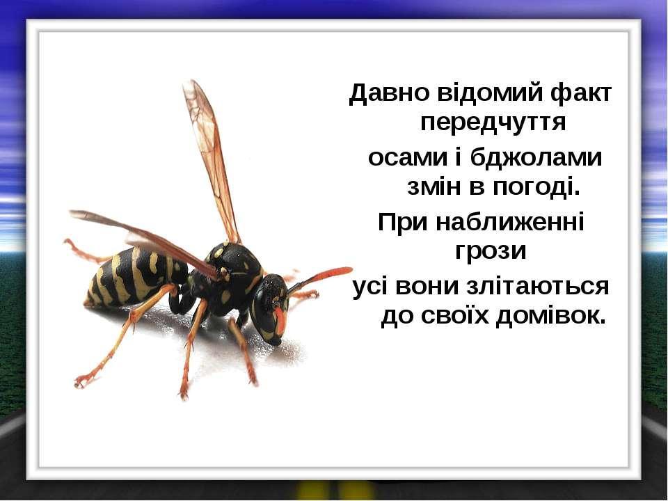 Давно відомий факт передчуття осами і бджолами змін в погоді. При наближенні ...