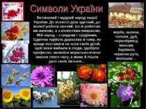 Величавий і мудрий народ нашої України. До всякого діла здатний, до всякої ро...