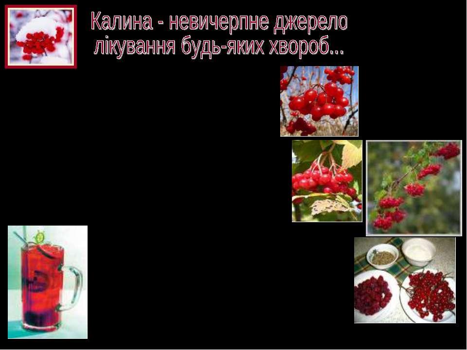 У насінні цієї рослини знаходиться аскорбінова кислота і до 21% жирного масла...