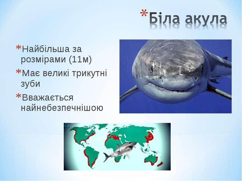 Найбільша за розмірами (11м) Має великі трикутні зуби Вважається найнебезпечн...