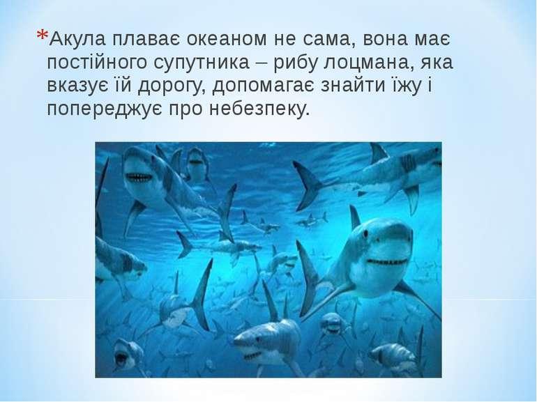 Акула плаває океаном не сама, вона має постійного супутника – рибу лоцмана, я...