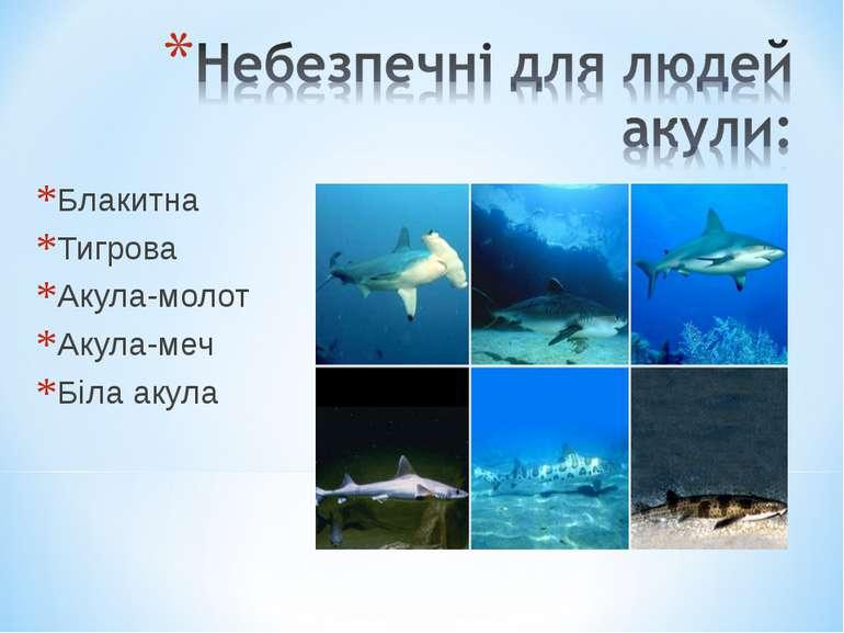 Блакитна Тигрова Акула-молот Акула-меч Біла акула