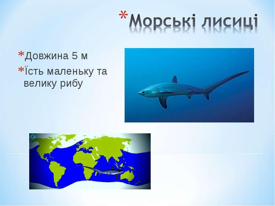 Довжина 5 м Їсть маленьку та велику рибу