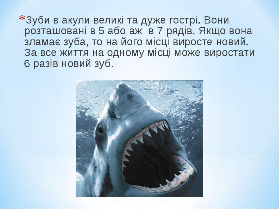 Зуби в акули великі та дуже гострі. Вони розташовані в 5 або аж в 7 рядів. Як...