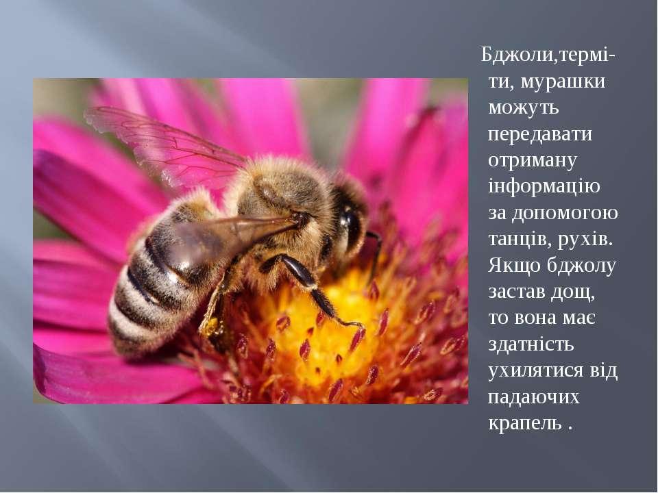 Бджоли,термі-ти, мурашки можуть передавати отриману інформацію за допомогою т...