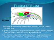 Завдання . Розмістити у правильному порядку відділи травної системи рака Стра...