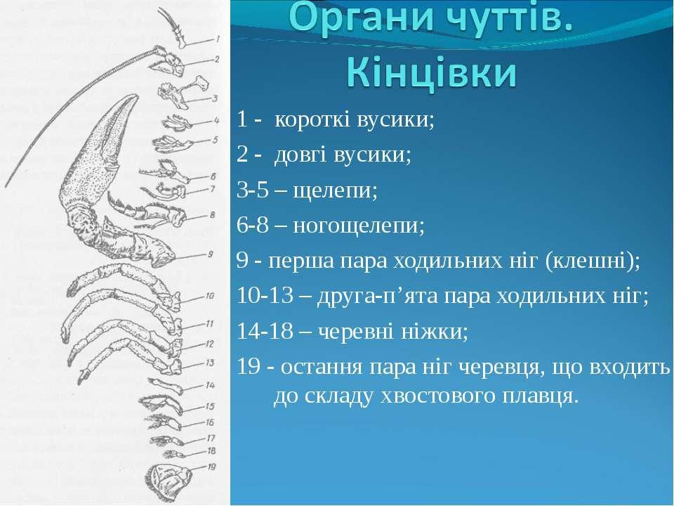 1 - короткі вусики; 2 - довгі вусики; 3-5 – щелепи; 6-8 – ногощелепи; 9 - пер...