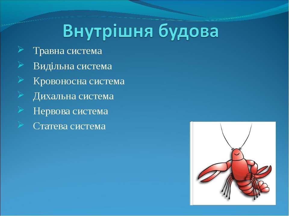 Травна система Видільна система Кровоносна система Дихальна система Нервова с...