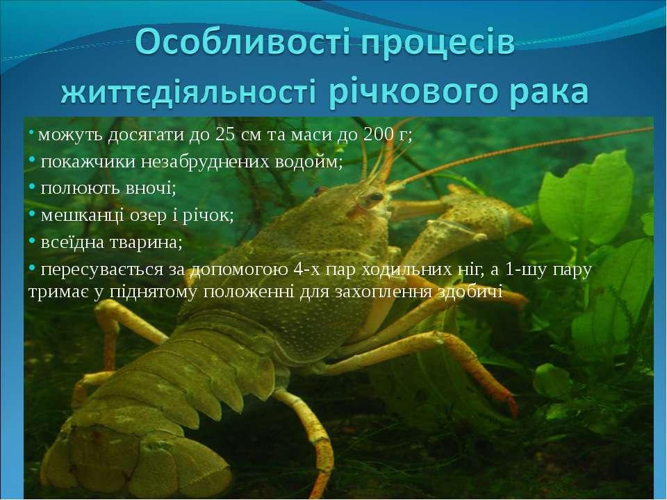 можуть досягати до 25 см та маси до 200 г; покажчики незабруднених водойм; по...
