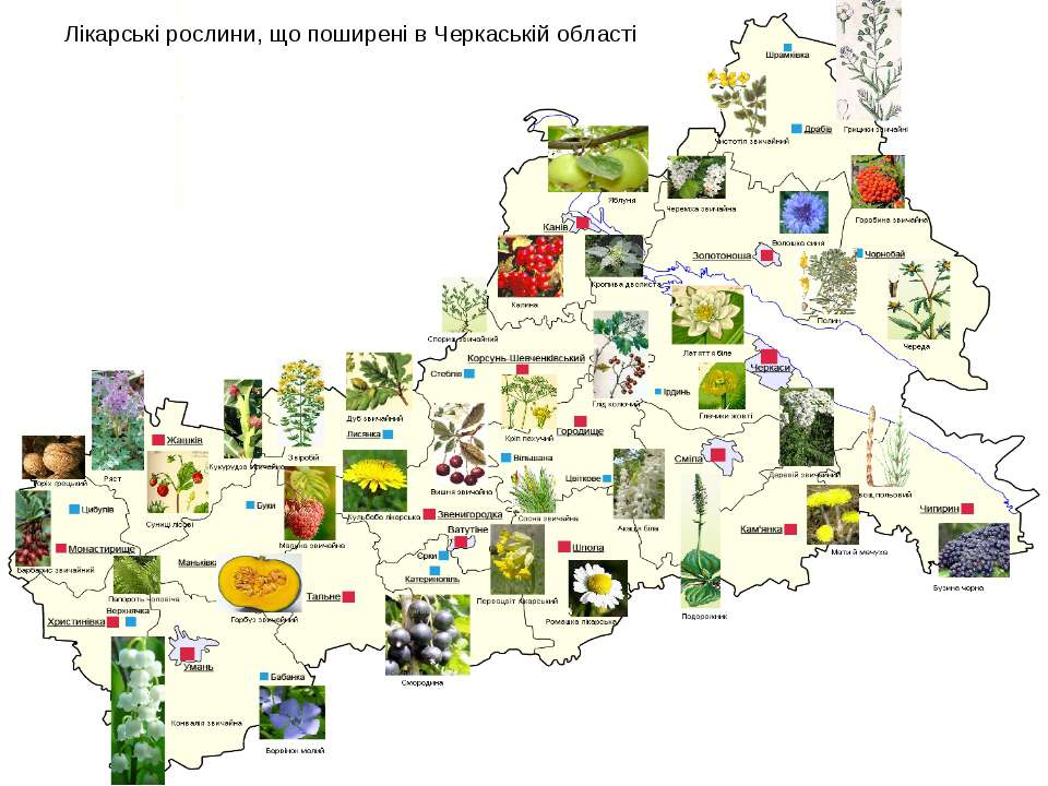 Лікарські рослини, що поширені в Черкаській області