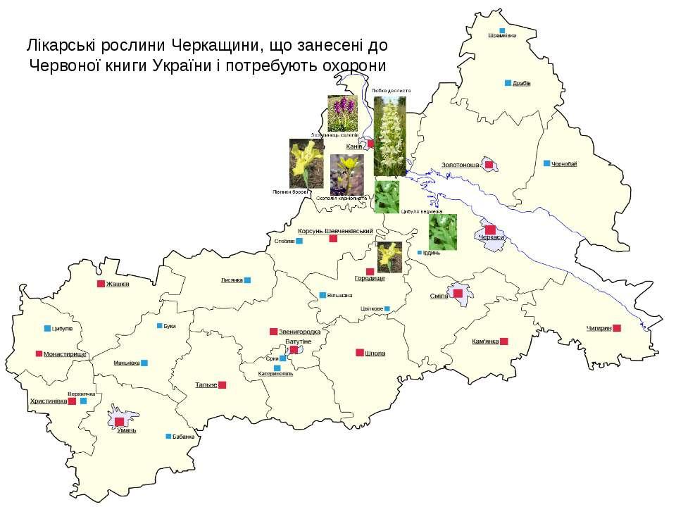 Лікарські рослини Черкащини, що занесені до Червоної книги України і потребую...