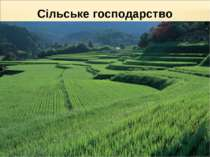 Сільське господарство забезпечує ¾ потреб у продовольстві !!! рослинництво ви...