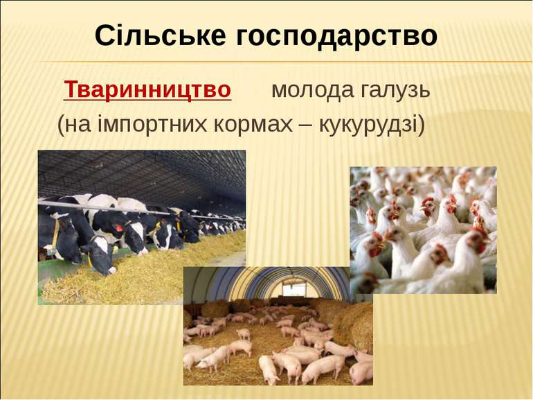 Сільське господарство Тваринництво молода галузь (на імпортних кормах – кукур...