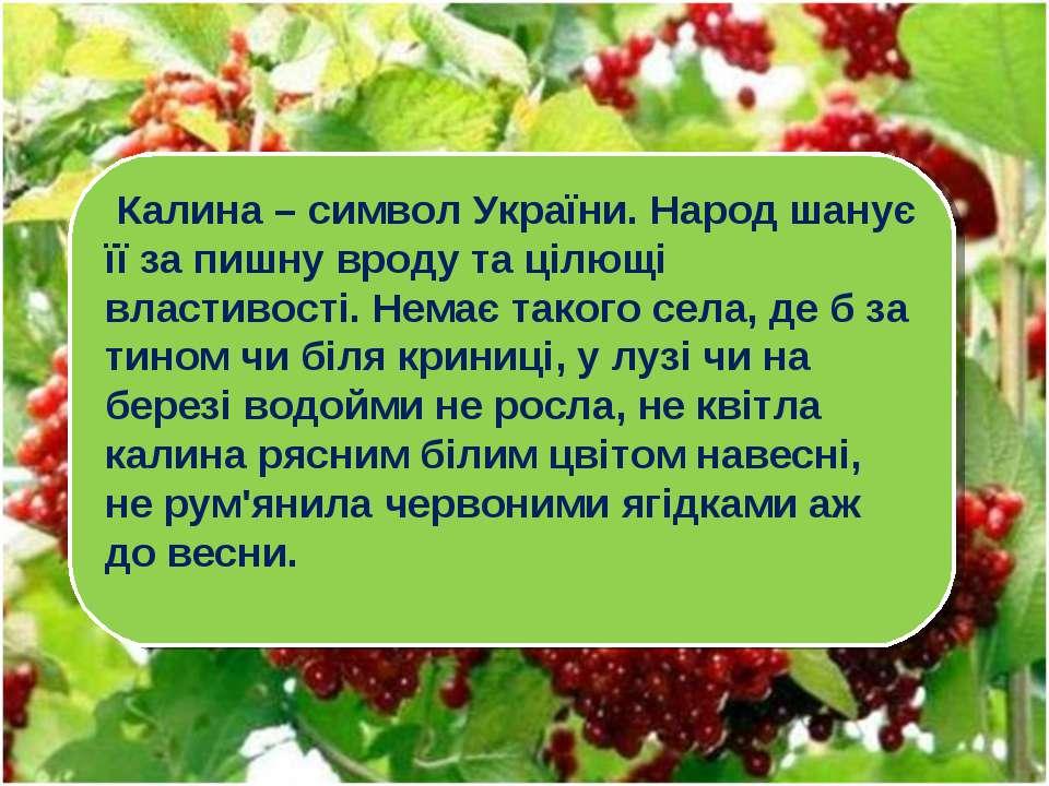 Калина – символ України. Народ шанує її за пишну вроду та цілющі властивості....