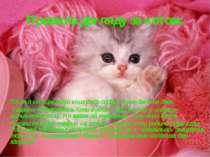 Правила догляду за котом: Після 8 місяців годуй кішку або собаку лише двічі н...