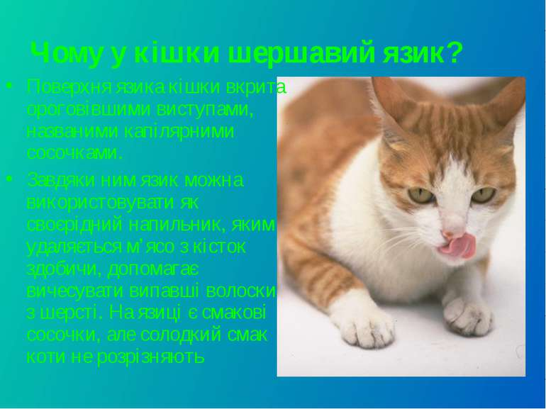 Чому у кішки шершавий язик? Поверхня язика кішки вкрита ороговівшими виступам...