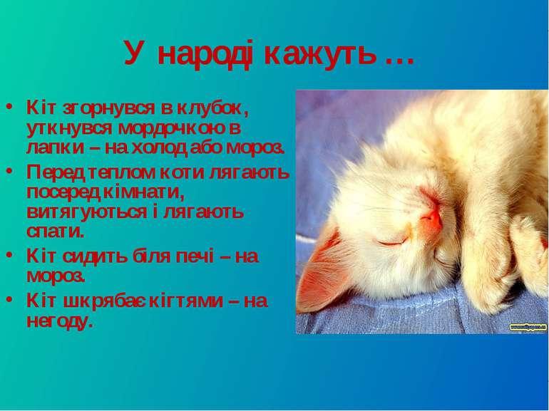У народі кажуть … Кіт згорнувся в клубок, уткнувся мордочкою в лапки – на хол...