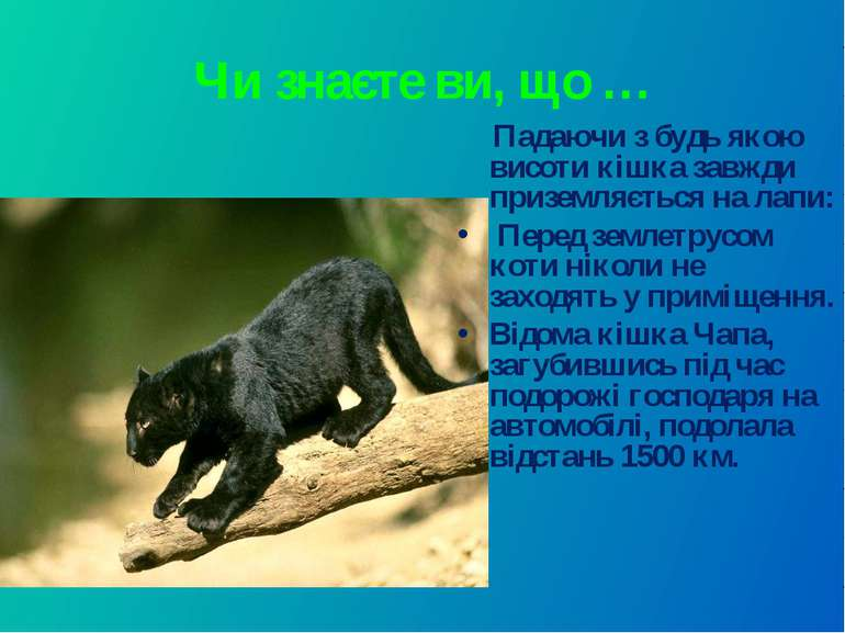 Чи знаєте ви, що … Падаючи з будь якою висоти кішка завжди приземляється на л...