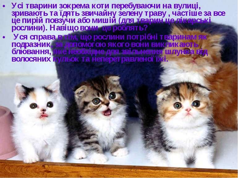 Усі тварини зокрема коти перебуваючи на вулиці, зривають та їдять звичайну зе...