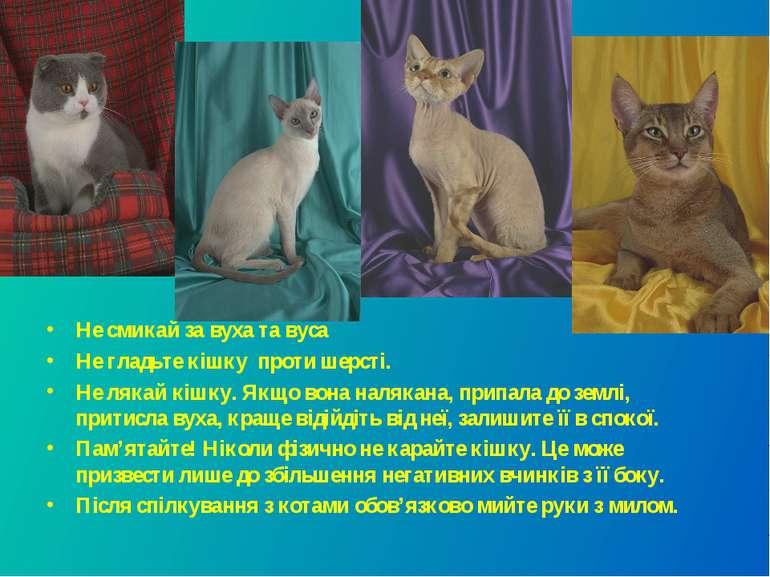 Не смикай за вуха та вуса Не гладьте кішку проти шерсті. Не лякай кішку. Якщо...