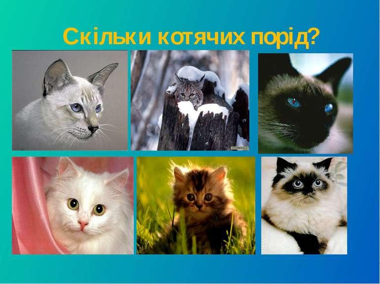 Скільки котячих порід?