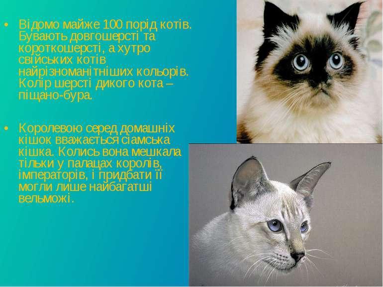Відомо майже 100 порід котів. Бувають довгошерсті та короткошерсті, а хутро с...