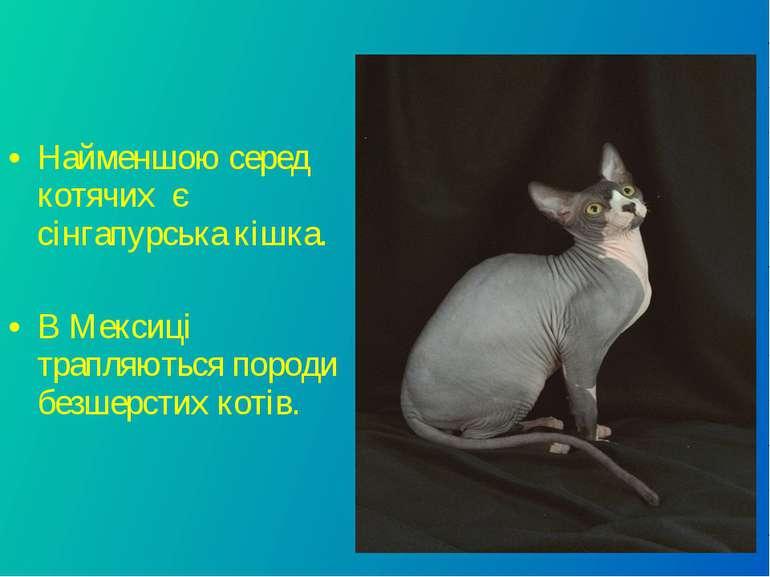 Найменшою серед котячих є сінгапурська кішка. В Мексиці трапляються породи бе...