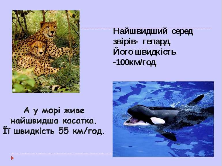 Найшвидший серед звірів- гепард. Його швидкість -100км/год.