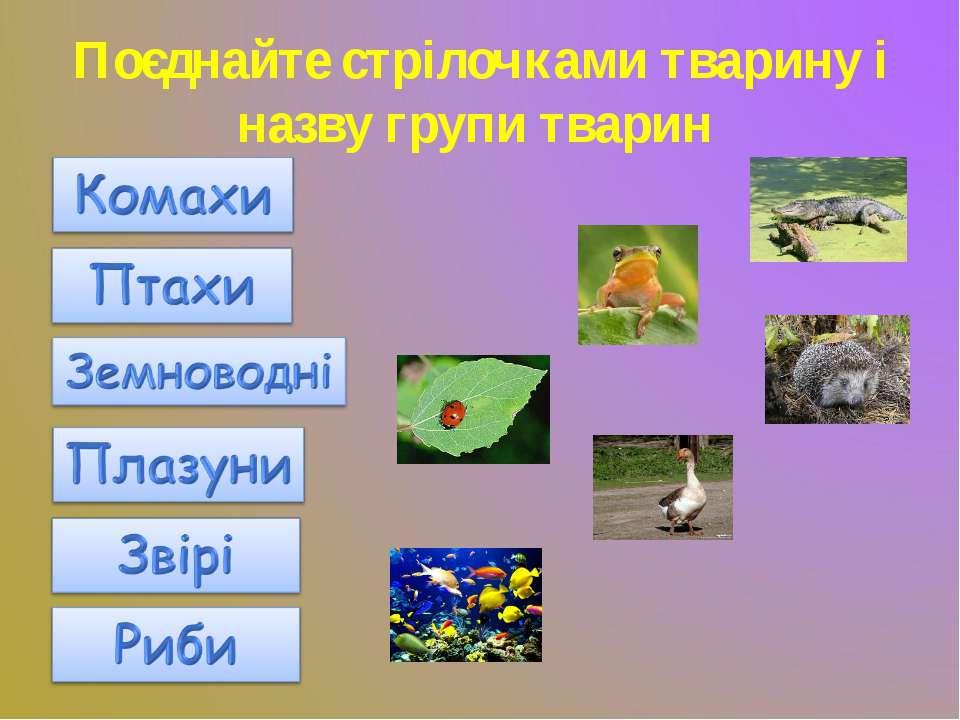 Поєднайте стрілочками тварину і назву групи тварин